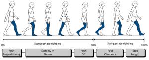 3: Gait cycle diagram and gait subtasks (grey blocks) focused on right   Download Scientific
