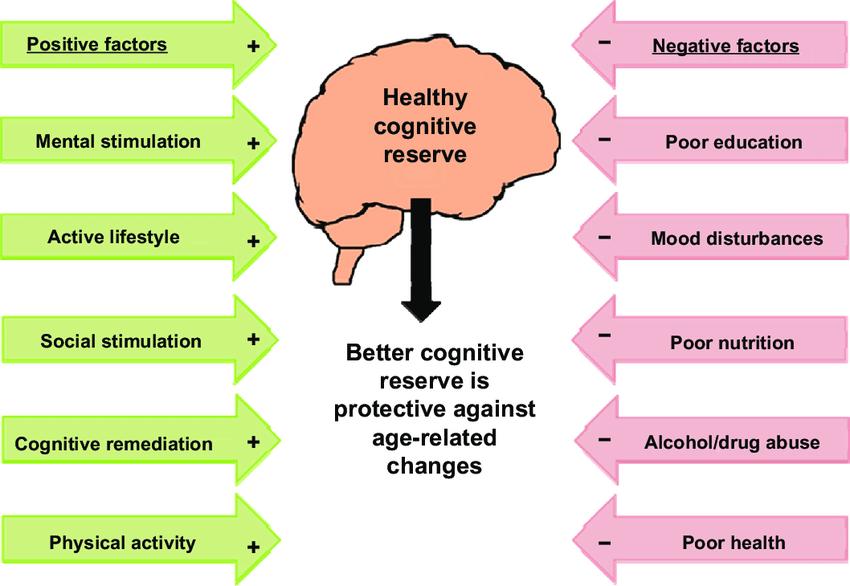 Contributing factors of cognitive reserve. Notes: + contributes to... |  Download Scientific Diagram