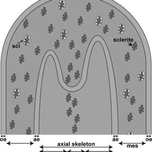 (PDF) Molecular Cloning and Characterization of First Organic Matrix Protein from Sclerites of