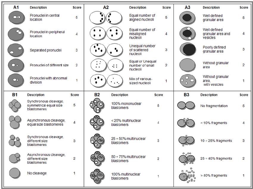 Blastocyst Grading System