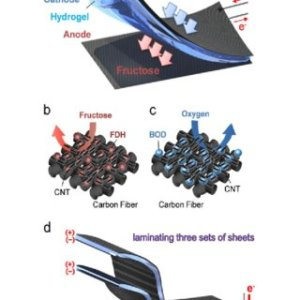 Schematic illustration of a hydrogen fuel cell   Download