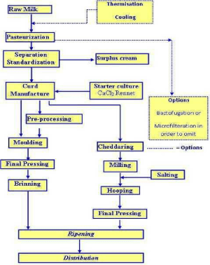 Cheese Production Flow Diagram Adopted from : Dairy Processing | Download Scientific Diagram