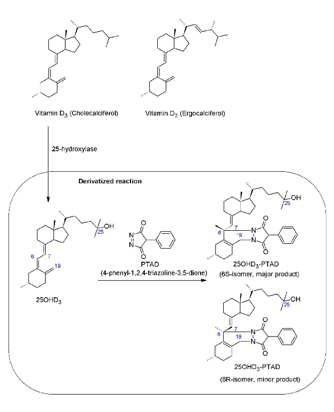Representations of the structures of vitamin D2, D3, 25 ...