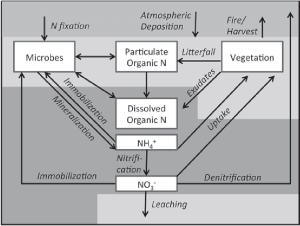 2 Simplified diagram of the terrestrial nitrogen cycle with major pools | Download Scientific