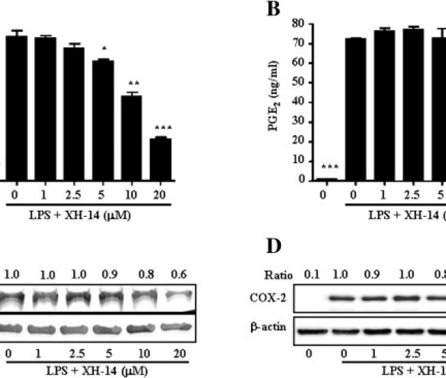 Effects Of Xh 14 On Lps Induced No And Pge2release Raw 264 7 Cells Were Treated With 0 20  Ce Bcm Of Xh 14 In The Presence Of 100 Ng Ml Of Lps Or With Lps Alone