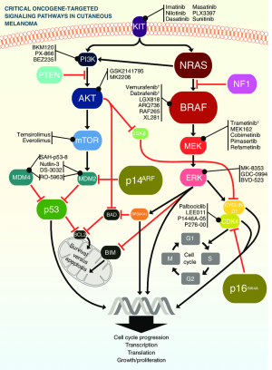 Critical oncogeargeted signaling pathways in cutaneous