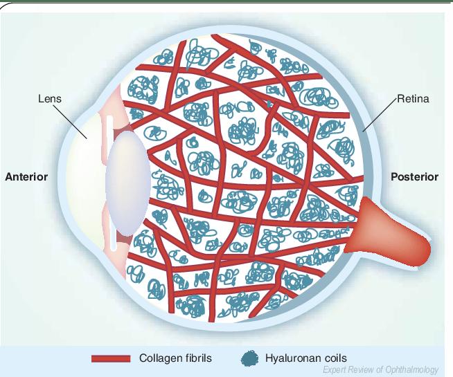 Diagram Of The Eye Lions Eye Institute