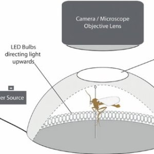 (PDF) Dome lighting for insect imaging under a microscope