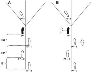 a Schematic diagram of gait cycle events analysed A gait cycle event   Download Scientific
