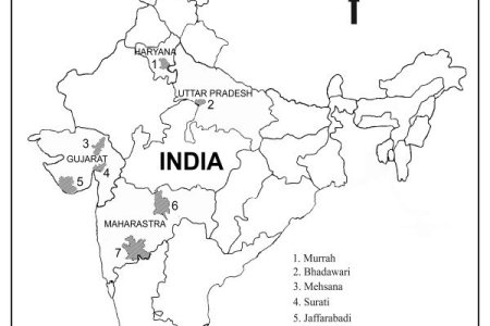 Outline of indian map full hd maps locations another world india outline map outline map india outline map india enchantedlearning com enchanted learning search india outline map printable rivers of india pinterest thecheapjerseys Image collections