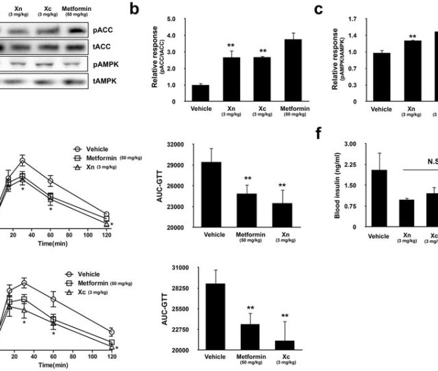 Xn And Xc Increase Ampk Activity And Glucose Utilization In High Fat Download Scientific Diagram