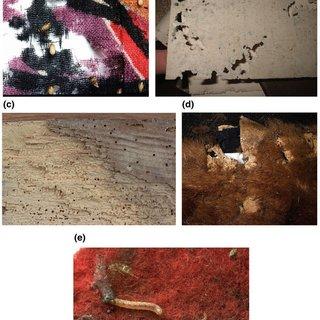 Pdf Museum Pests Cultural Heritage Pests