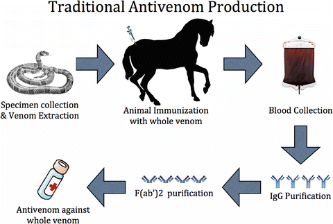 Traditional antivenom production. Briefly, after specimen collection,...    Download Scientific Diagram