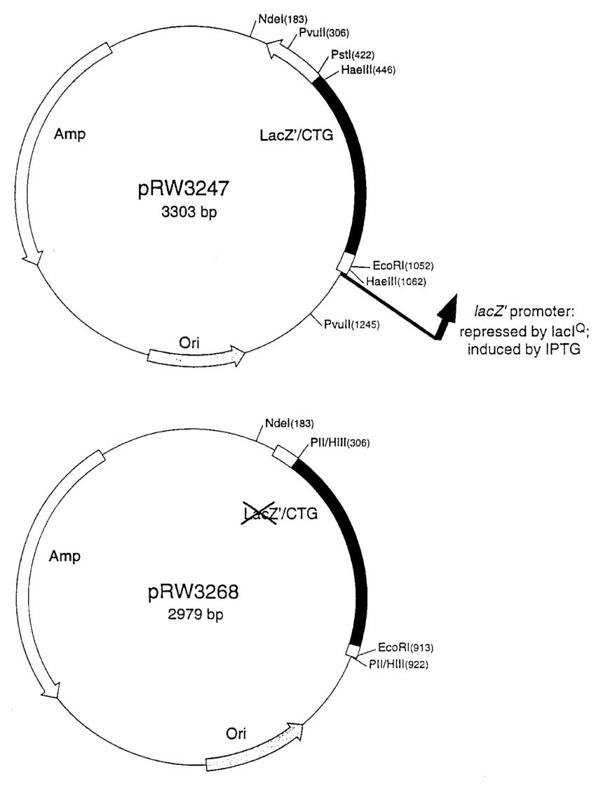 Schematic diagram of plasmids containing ctg·cag triplet repeats