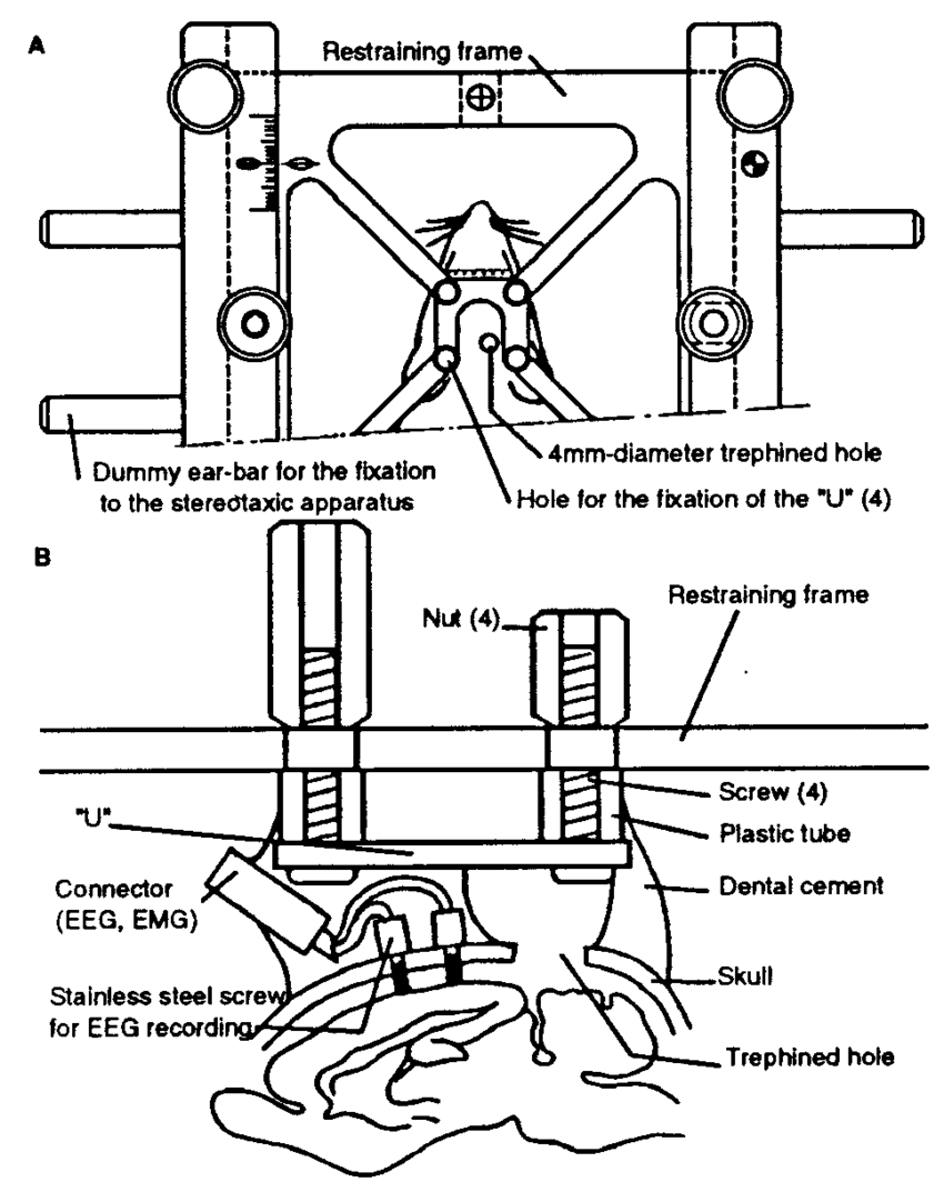 A schematic drawing of the head restraint system b cross section