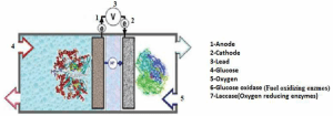 : A general diagram for an enzymatic biofuel cell