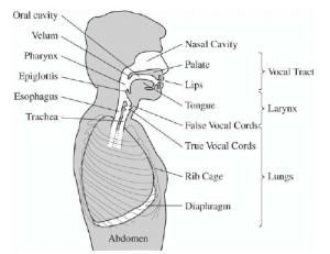 1: Overview of human voice production mechanism (Quatieri