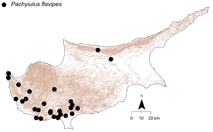 Pachyiulus flavipes, distribution in Cyprus.
