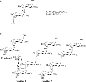 Structures of fucoidan from F evanescens (A) and products
