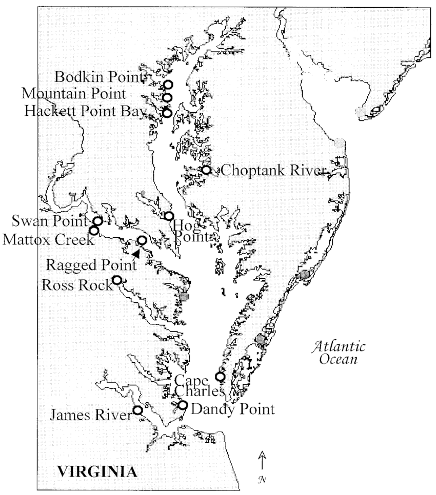 Fig 2 map of chesapeake bay showing s ling locations of oysters