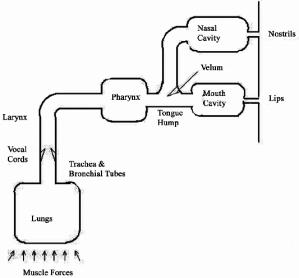 Block diagram of human speech production | Download
