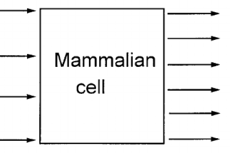 Diagram of animal cell path decorations pictures full path to make an animal cell model is here simple plant cell drawing at getdrawings com free for personal use x simple plant cell drawing labelled diagrams ccuart Choice Image