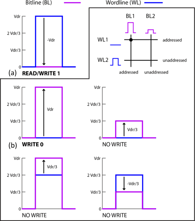 Voltage input to memory word lines and bit lines during (a) the