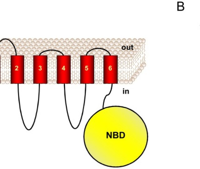 A The Topology Of The Protein Bmra That Exhibits Six Transmembrane Domains And A Nucleotide Binding Domain Nbd Is Represented B The Purified Protein