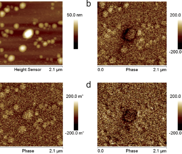 Cm Mfm Characterization Of Superparamagnetic Nps A Topography Of An Area Where Some Nps Are Visible And B Corresponding Standard Mfm Phase Image