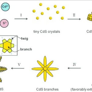 Schematic diagram shows the possible growth mechanism of