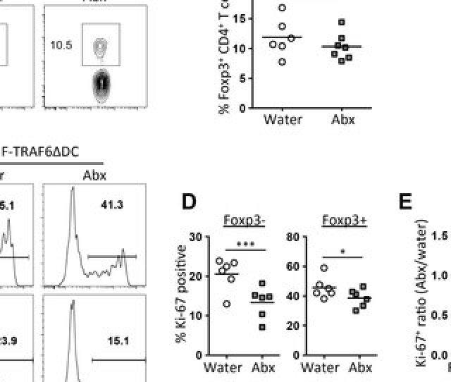 Antibiotics Reduce Traf6 Ce B4dc Lung T Cell Proliferation Broad Spectrum Antibiotics Were Given To