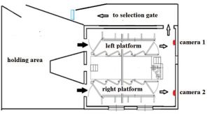Layout of milking parlor with adjacent traffic lanes and selection gate | Download Scientific