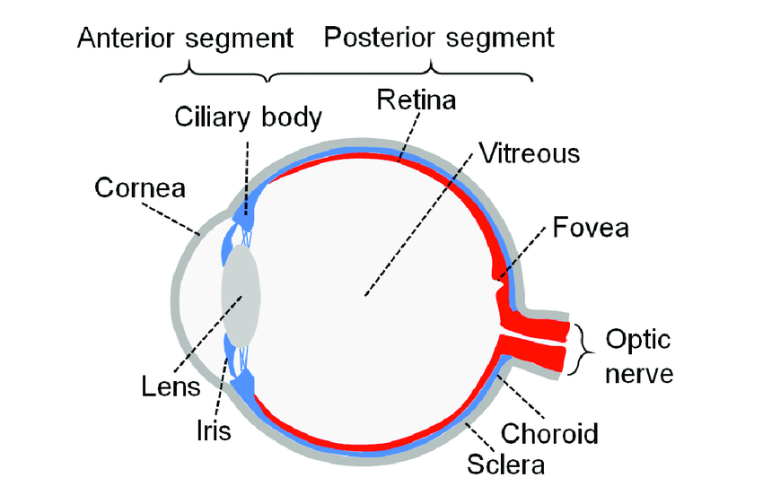 Vitrectomy For Floaters The American Society Of Retina Specialists