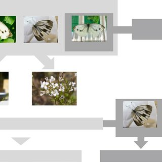 Pdf Differential Regulation Of Host Plant Adaptive Genes In