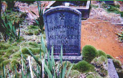 tombstonealexanderiida