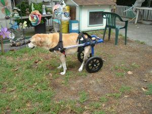 wheelchair dog house