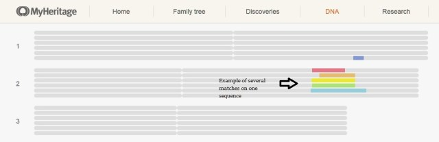 MyHeritage DNA chromosome browser many matches one sequence