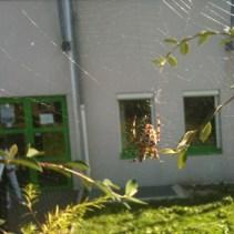 2011-clg-club-jardin-reprise04