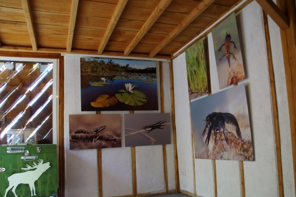 Exposition naturaliste d'Objectif Nat'