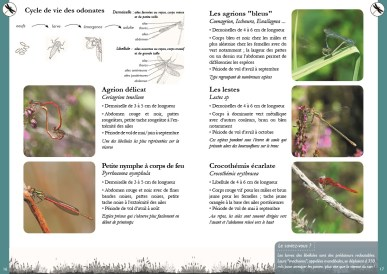 Double page exemple du guide - odonates