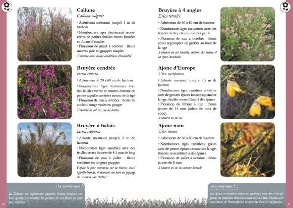 Double page exemple du guide - plantes de landes