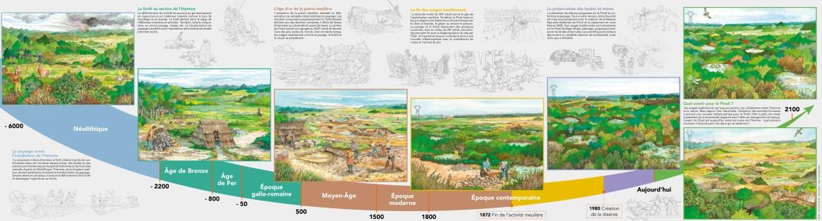 Evolution du paysage du Pinail au grès des activités humaines - Dessin Brossard