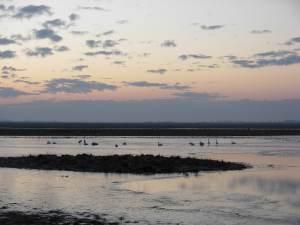 Le lever du jour et son ambiance particulière, l'un des moments forts de ces ouvertures à thème © RNN St Denis du Payré