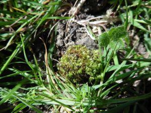 Les mousses sont d'excellents bio-indicateurs de la qualité des milieux naturels.