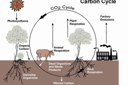 Carbon and oxygen cycle definition full hd pictures 4k ultra cycle flow chart best of cardiac cycle flow chart google environmental biology sequence ecosystems carbon cycle diagram biogeochemical cycles explained ccuart Gallery