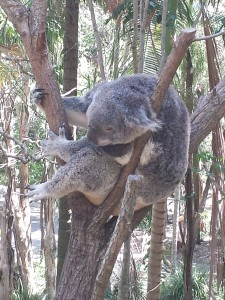 This Koala is completely secure from cyber attack