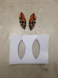 Trimmed butterfly wings