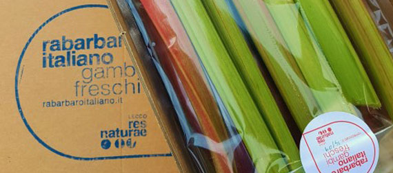 gambi freschi rabarbaro italiano confezionati