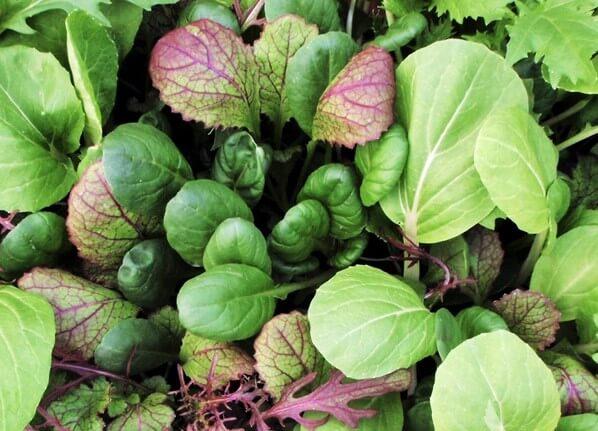 Mix insalate orientali, Brassica rapa