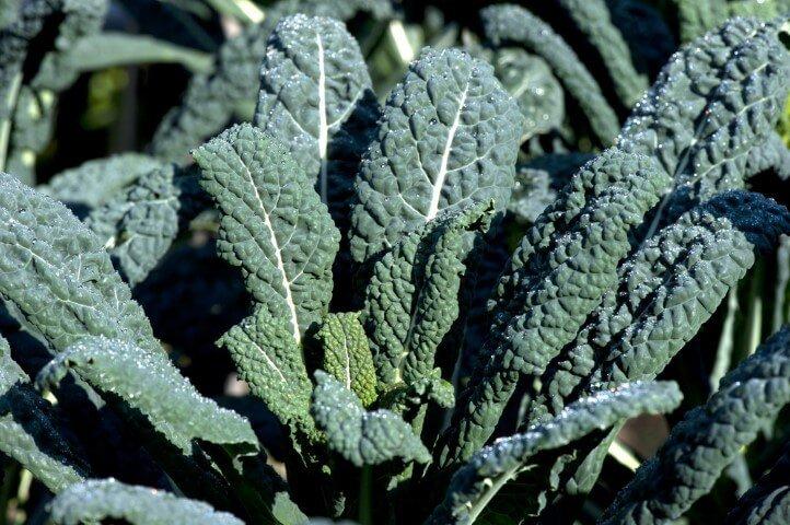 Preparare il cavolo kale